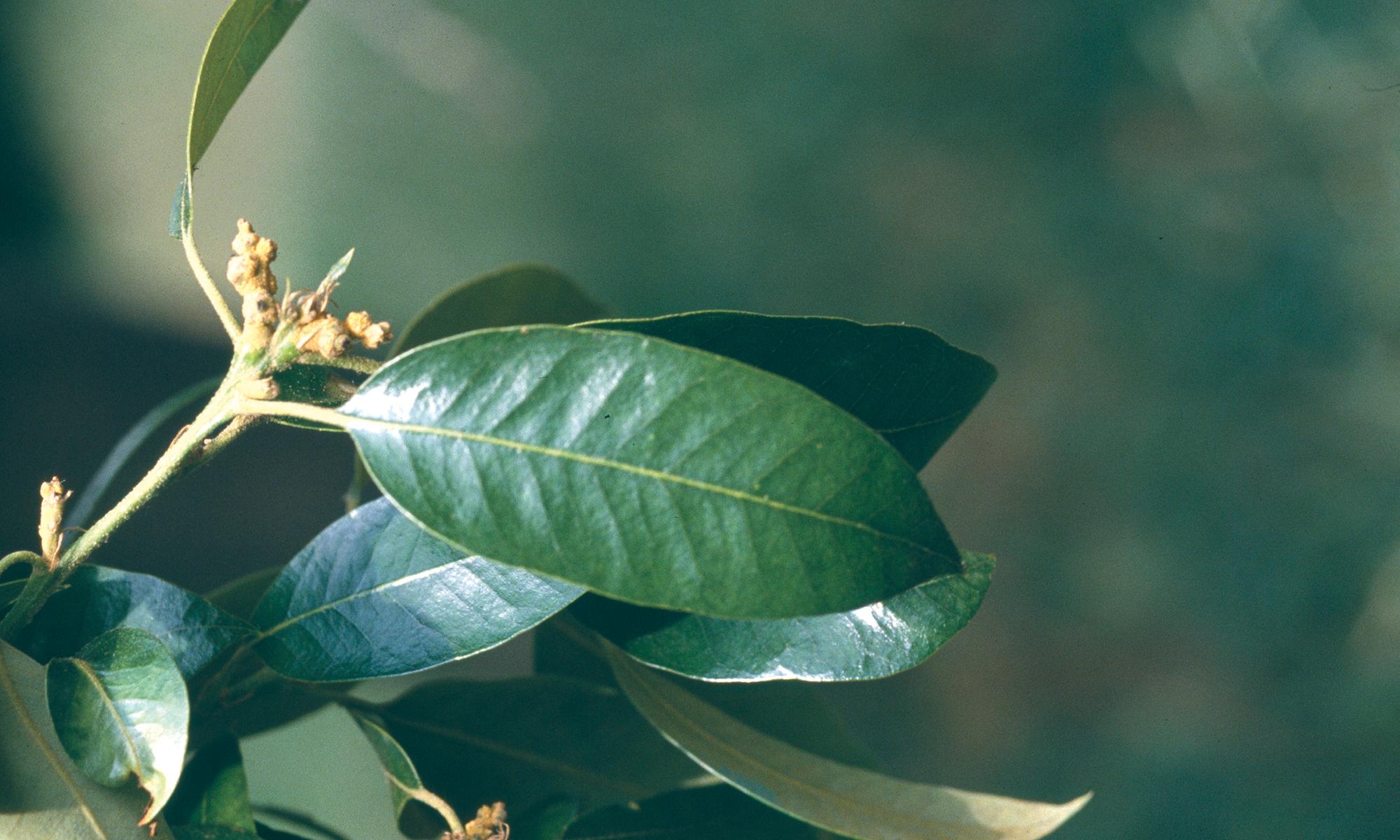 Pépinières botaniques de la Preille