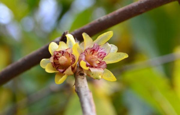 Floraisons décoratives